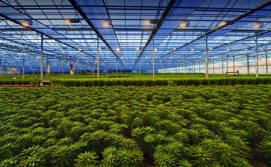 LED lights warming plants